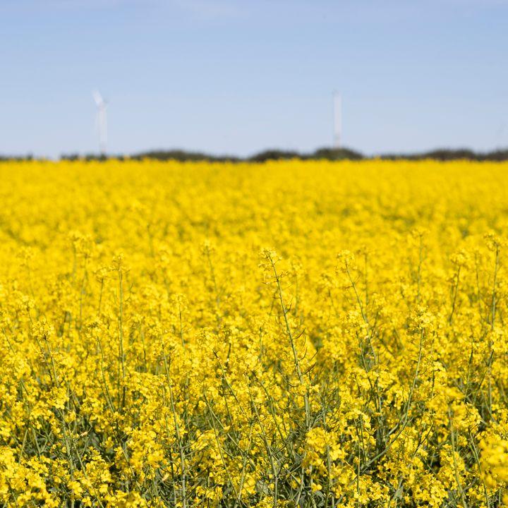 Õigeaegselt tehtud taimekaitse annab saagikust juurde